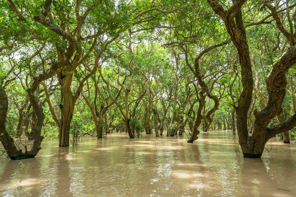 Eine Ruderbootstour durch einen schwimmenden Wald bei Siem Reap