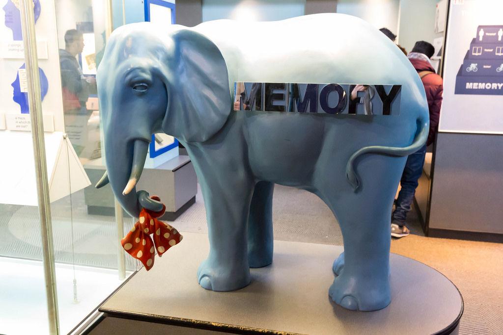 Elefantengedächtnis: Elefant mit Knoten