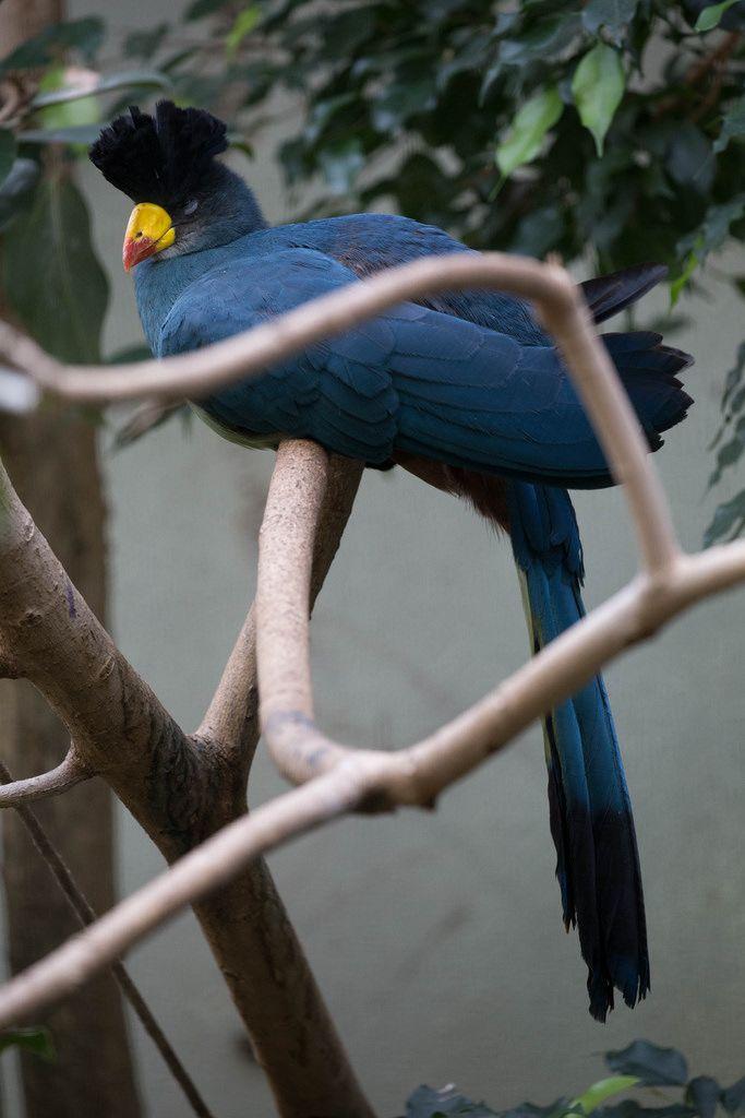 Exotischer Vogel im Zoo Ueno, Tokyo