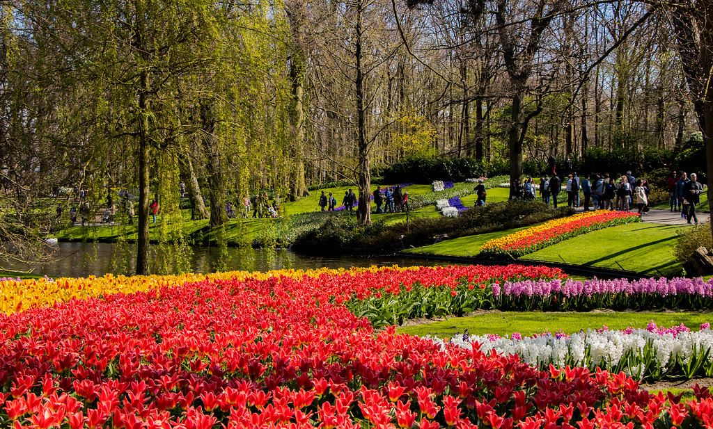 Fall Season Photo of Red and Yellow Tulips in Keukenhof Garden in Amsterdam, Netherlands