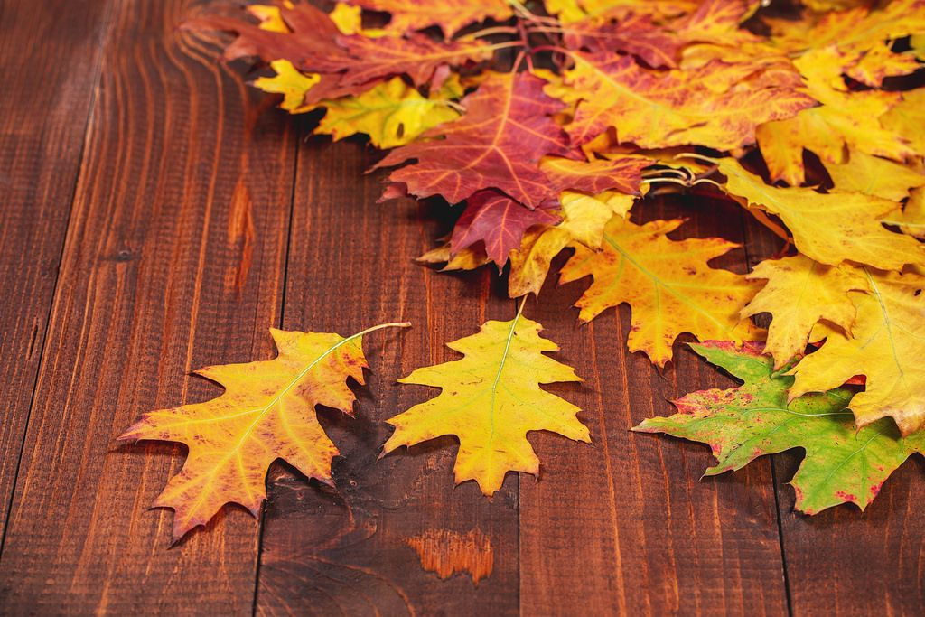 Fallen autumn yellow leaves on wooden background