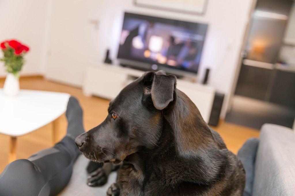 Fernsehen mit Hund