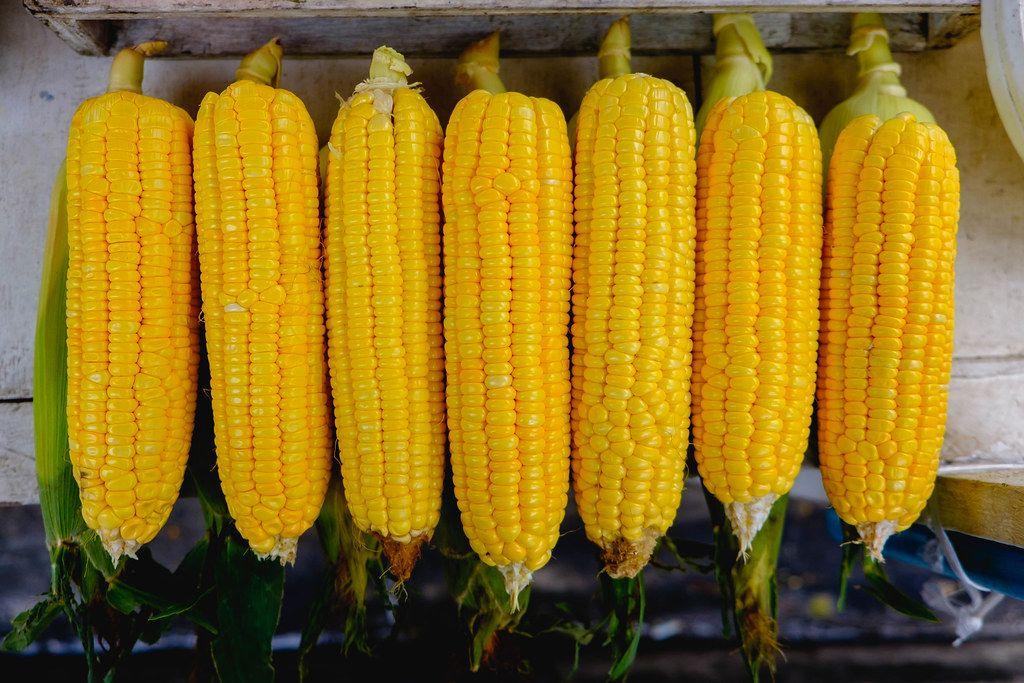 Flat lay of sweet corn sold at a food cart