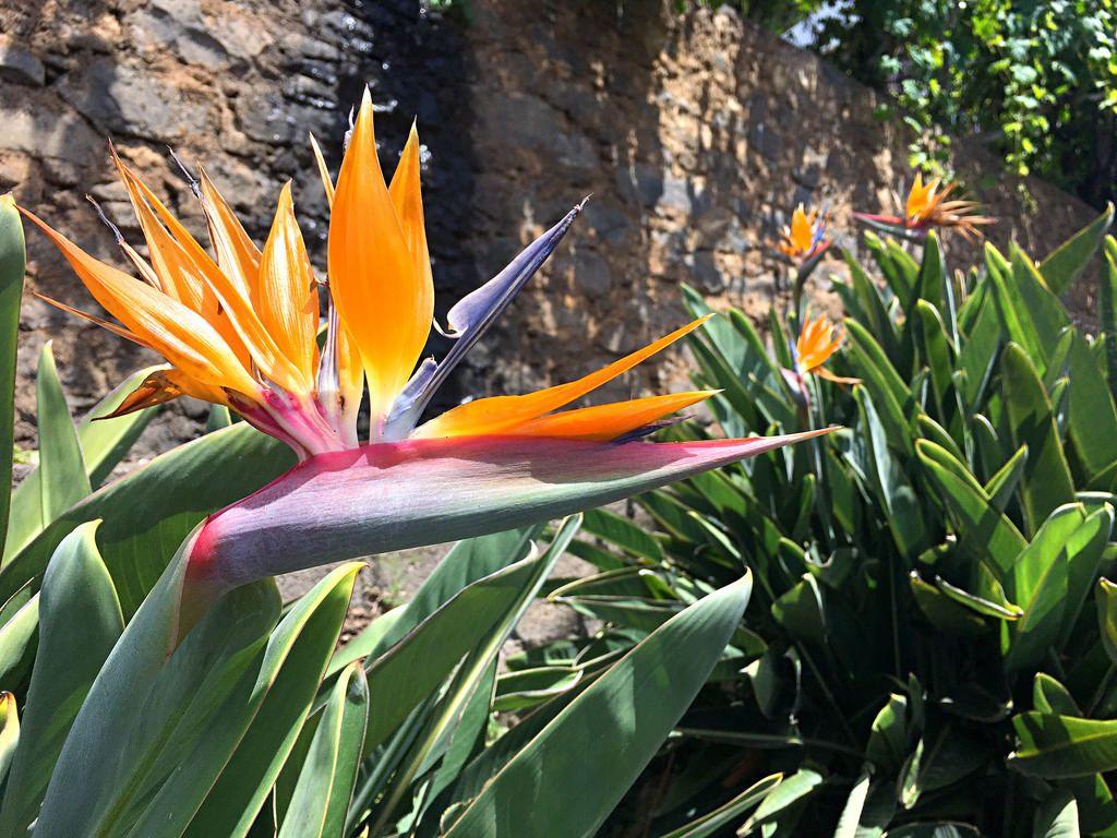 Flor de Paraiso