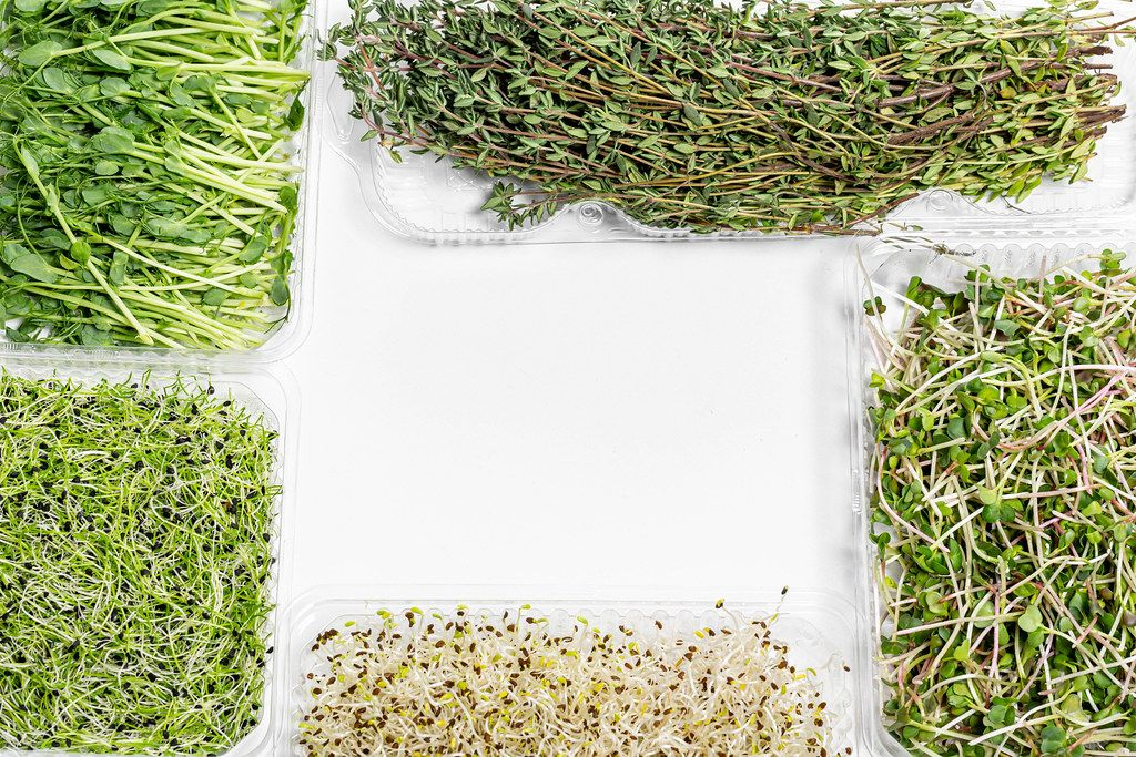 Frame micro-greens onions, alfalfa, radish, peas and thyme on white background with free space