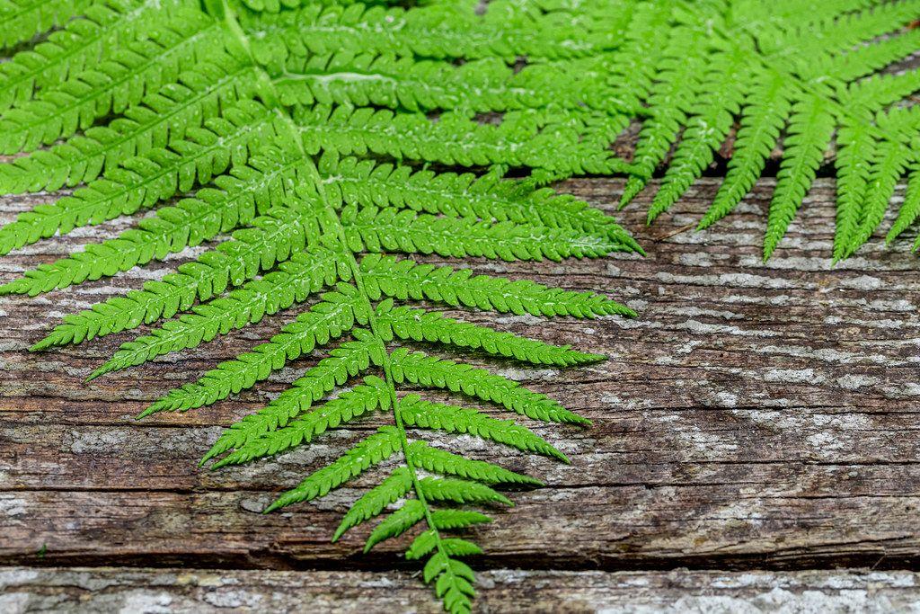 Fresh fern leaves on old wooden background (Flip 2019)