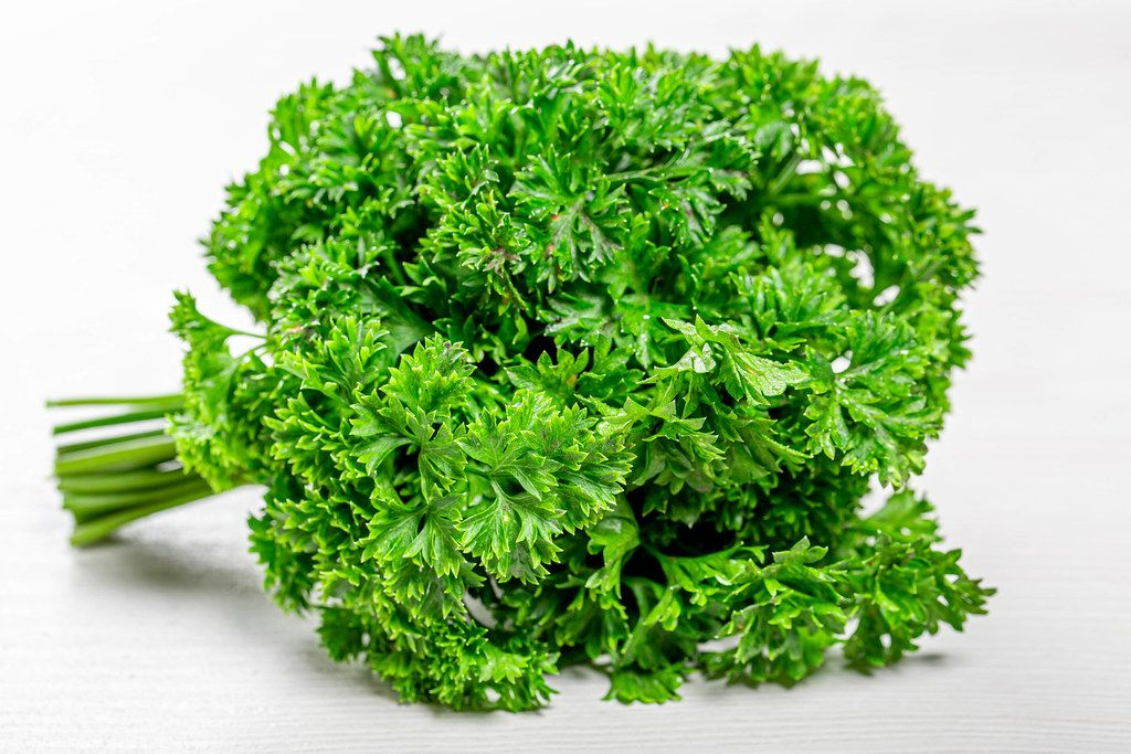 Fresh green parsley on white wooden background