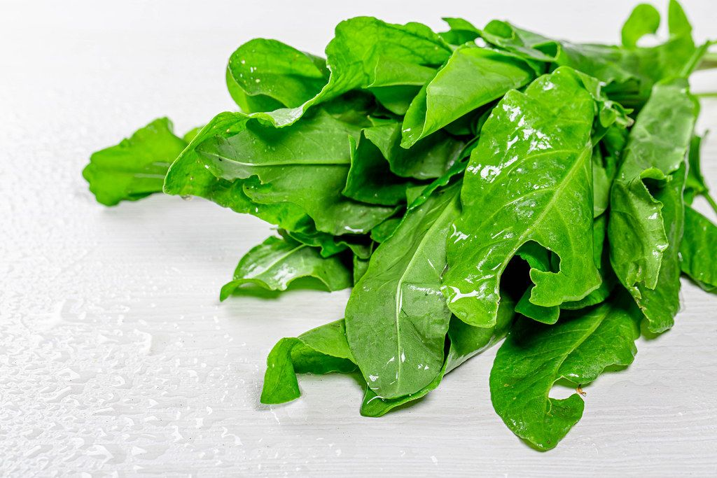 Fresh green sorrel with water drops