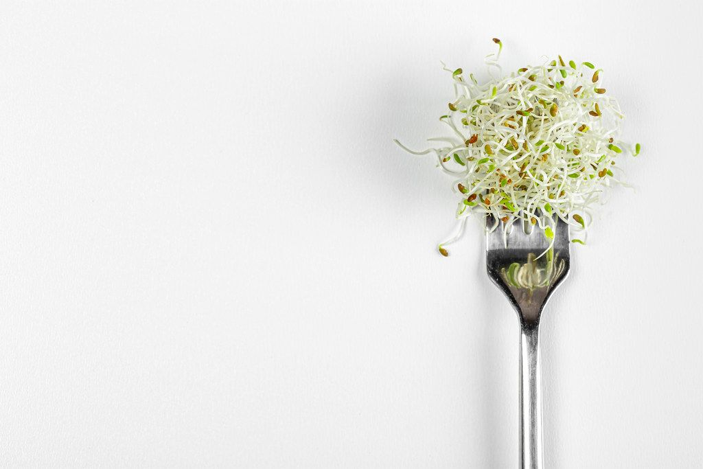 Fresh micro-green onions on a fork on a white background with free space