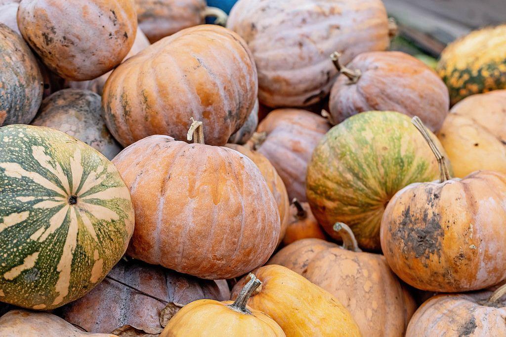 Fresh orange pumpkins