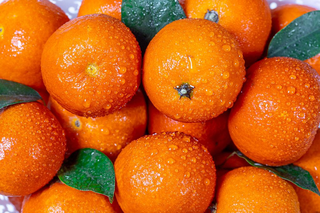Fresh oranges tangerines with leaves and water drops