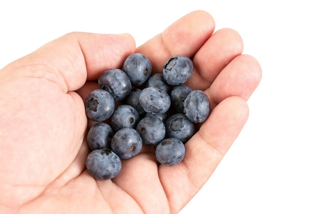 Fresh Whole Blueberries in the hand