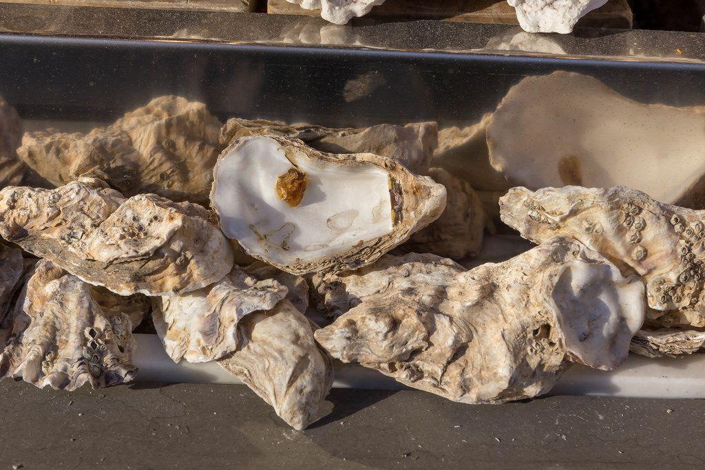 Frische Austern am Markt