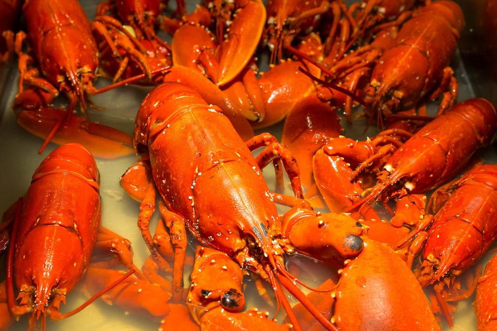 Frischer Hummer (Lobster)