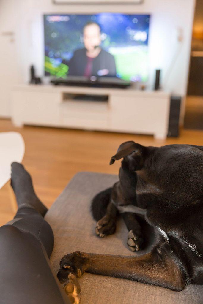 Fußball gucken mit Hund