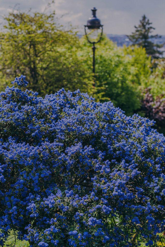 Gardens Of Sacré Coeur