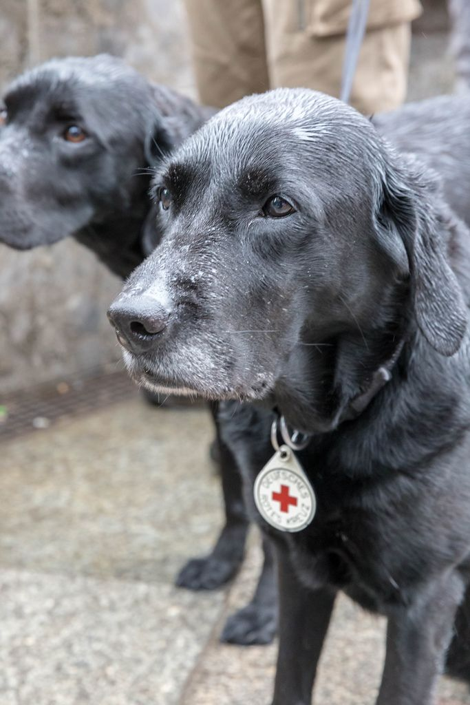 German Red Cross dogs at Fridays For Future Cologne