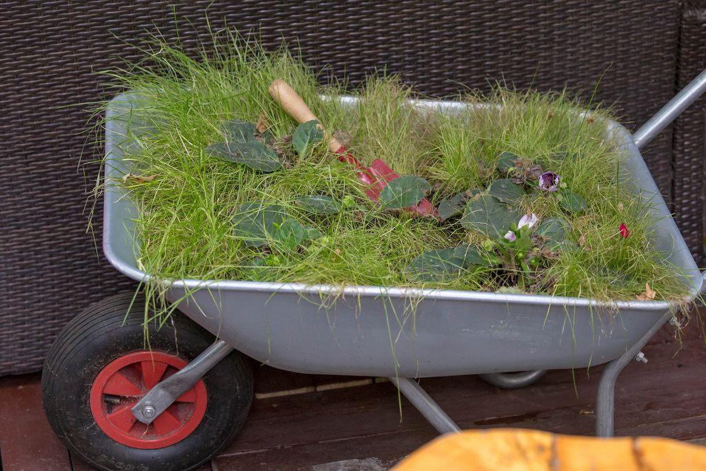 Gras und Blumenpflanzen in einer Schubkarre