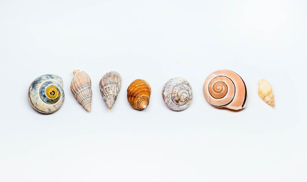 Group Of Sea Shells On white Background