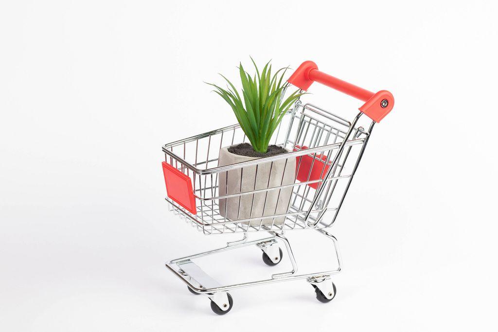 Grüne Zimmerpflanze in Steintopf steht in Einkaufswagen vor weißem Hintergrund