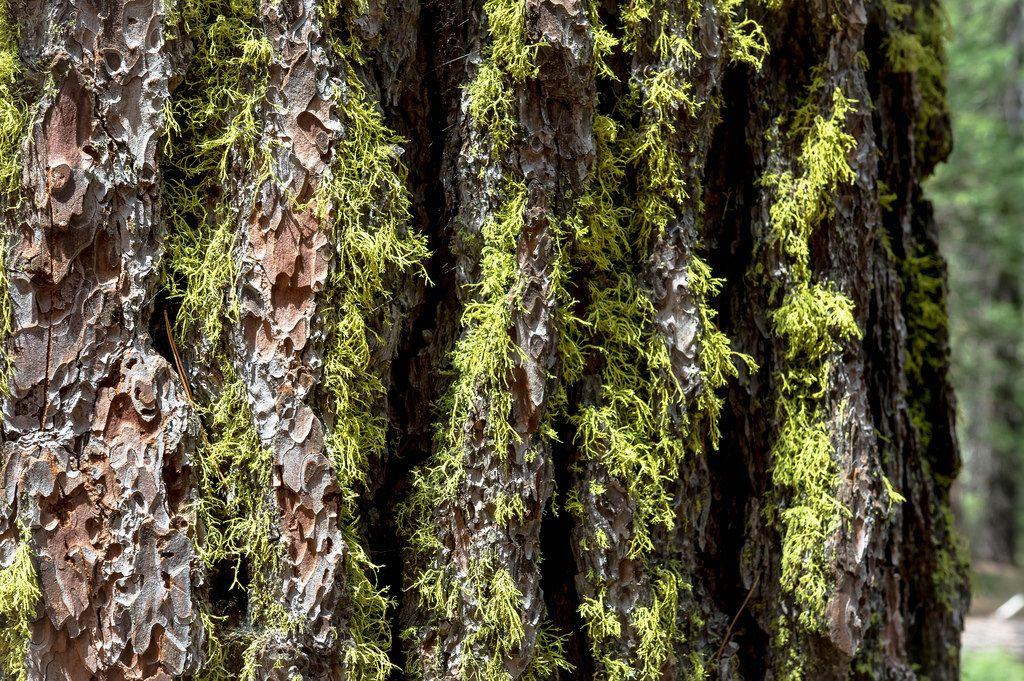 Grünes Moos auf einer Baumrinde