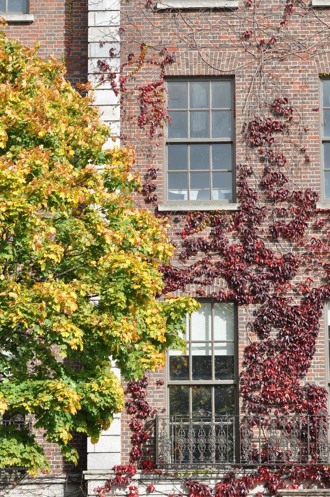 Haus im Herbst in Dublin