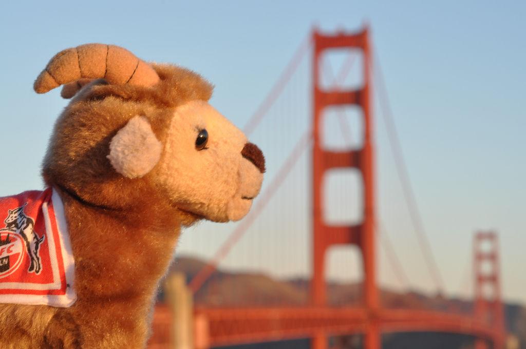 Hennes vor Golden Gate Brücke