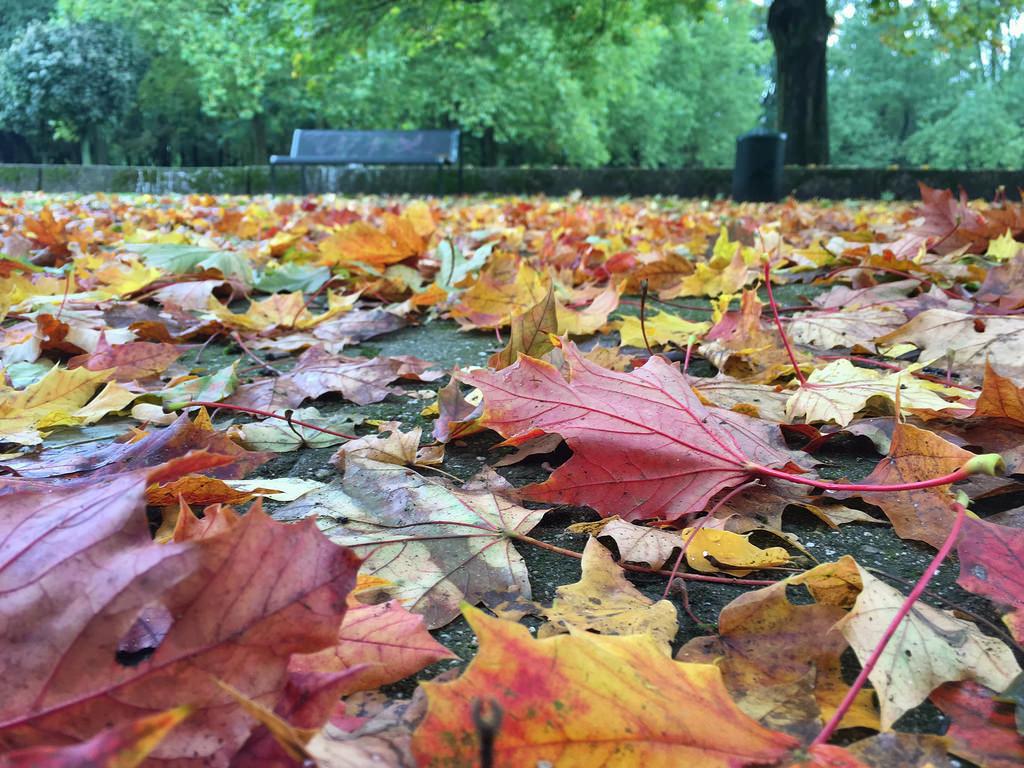Herbst in Köln: Blätter im Grüngürtel