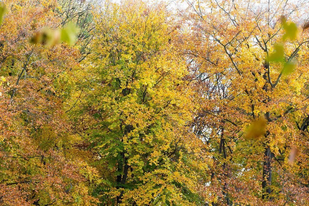 Herbstfarben im Park