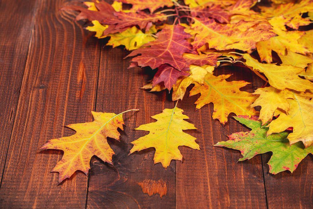 Herbstlaub auf braunem Holz-Hintergrund