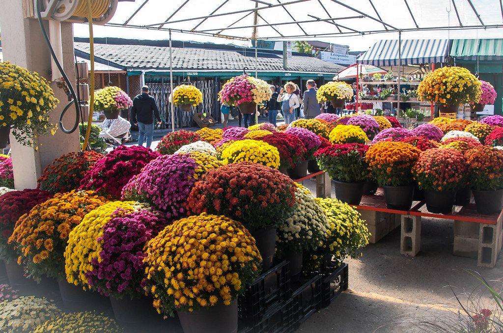 Herbstliche Blumen in prächtiger bunter Farbe auf dem Markt