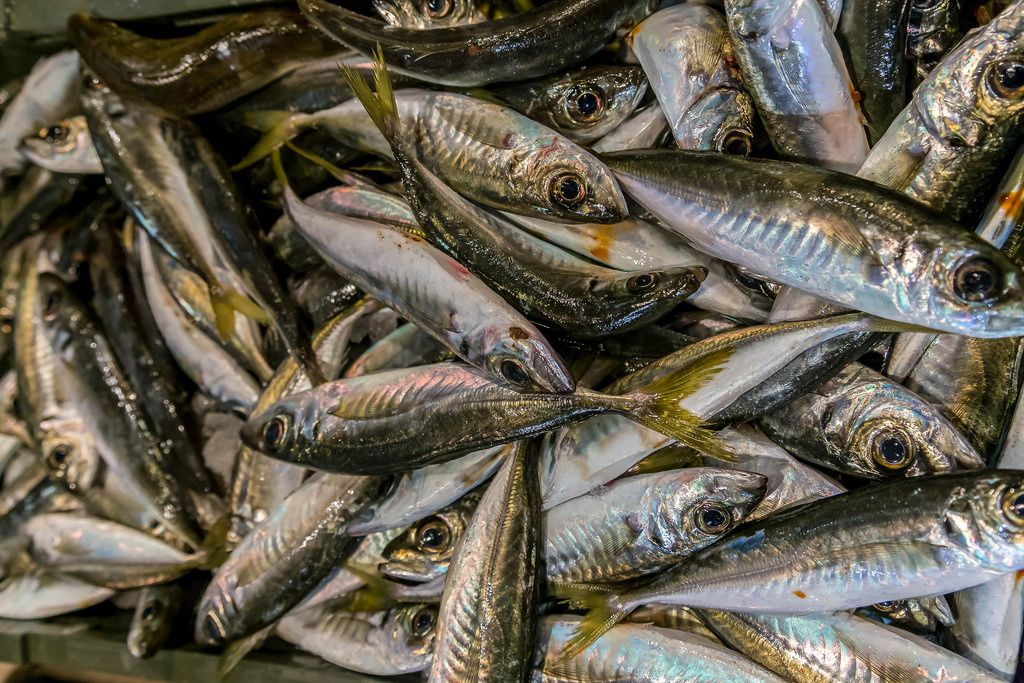 Horse mackerel on fish market