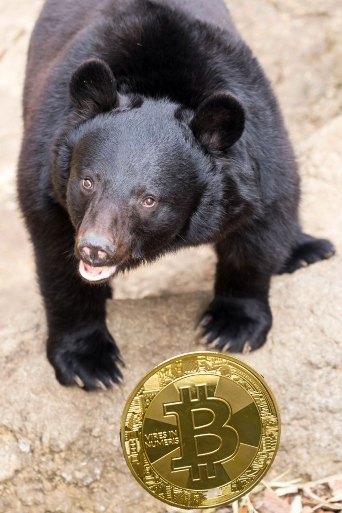 How long will the Bitcoin Bear Market last?