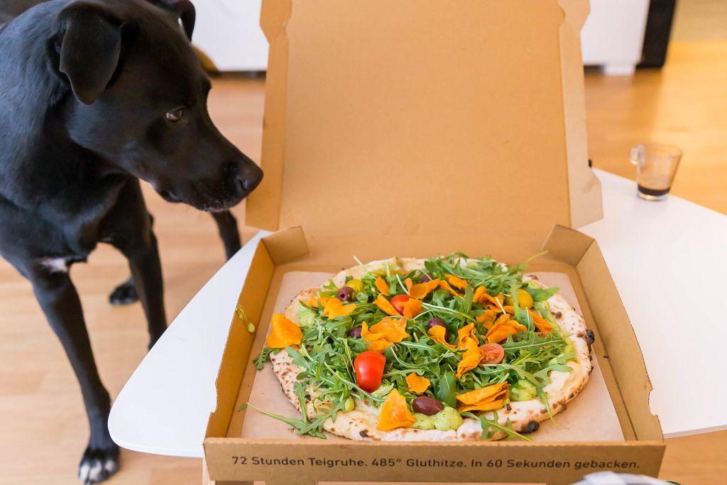 Hund betrachtet die Holy Guacamole »vegan« Pizza in der Schachtel