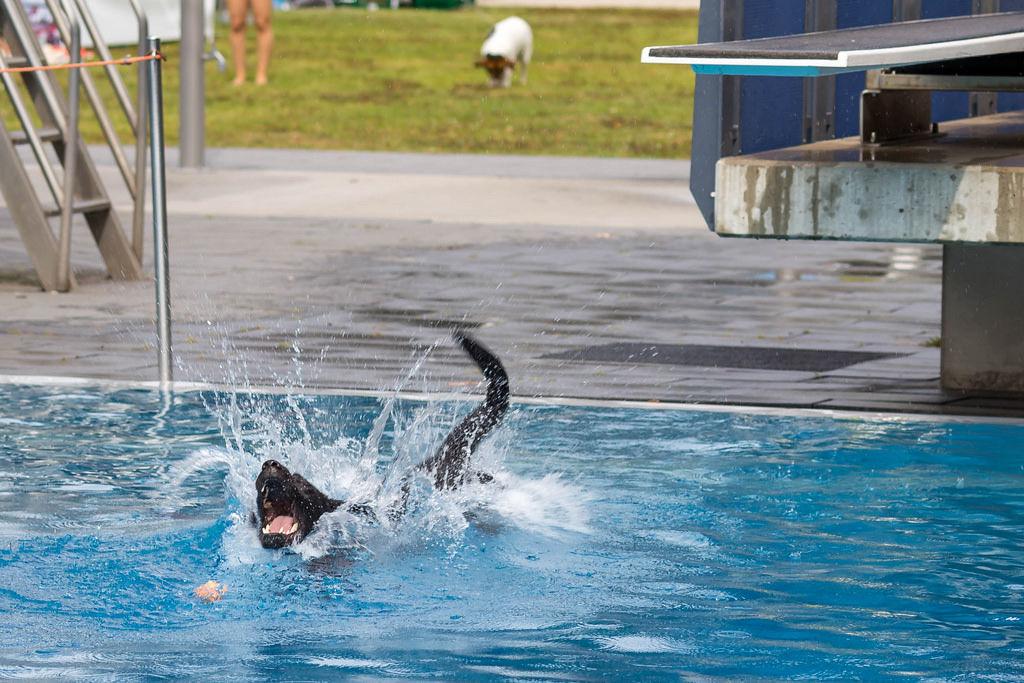 Hund im Wasser mit Ball