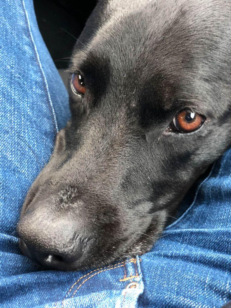 Hund liegt auf meinen Beinen und schaut in die Kamera