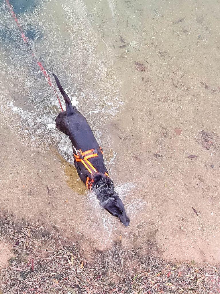 Hund schüttelt sich das Wasser aus dem Fell