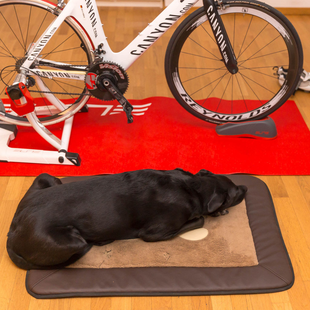 Hund und Triathlon-Fahrrad