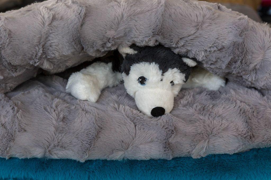 Hunde-Kuscheltier im Schlafsack für den Hund
