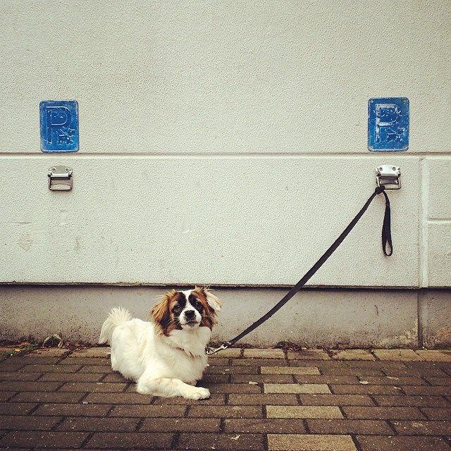 Hundeparkplatz bei REWE