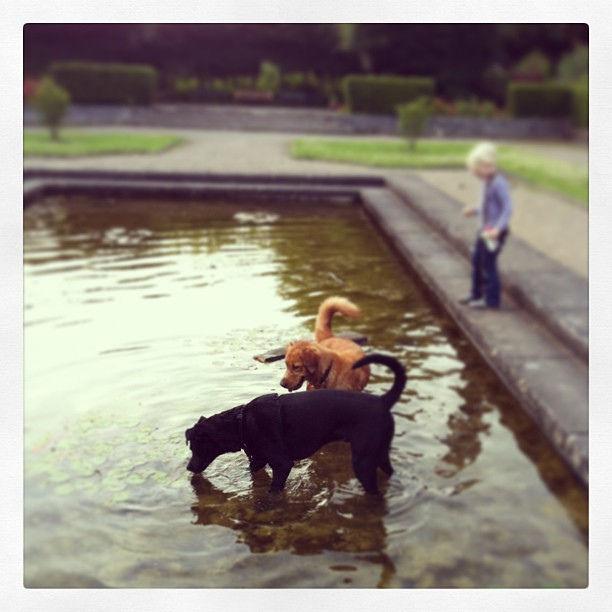 Hundespaß #dogs #summer
