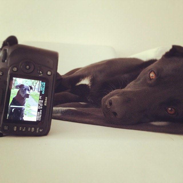 Hundetraining macht müde. #instapic #labrador #laboftheday #pet #puppy #picoftheday