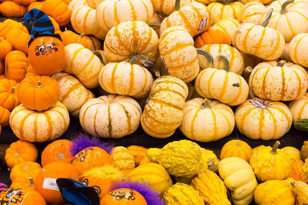 In Vorbereitung auf Halloween: breites Sortiment an Kürbissen im Supermarkt