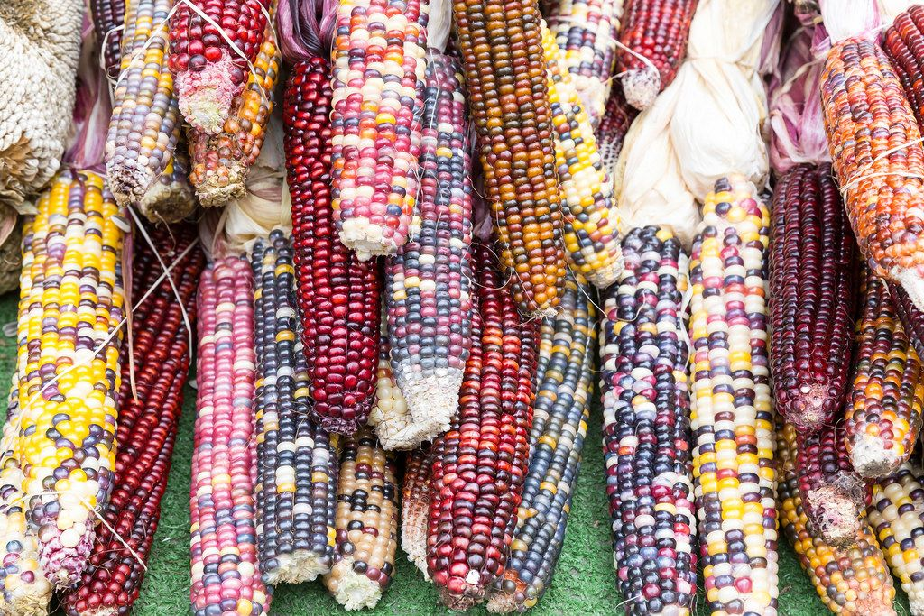 Indian corn - City Market, Chicago
