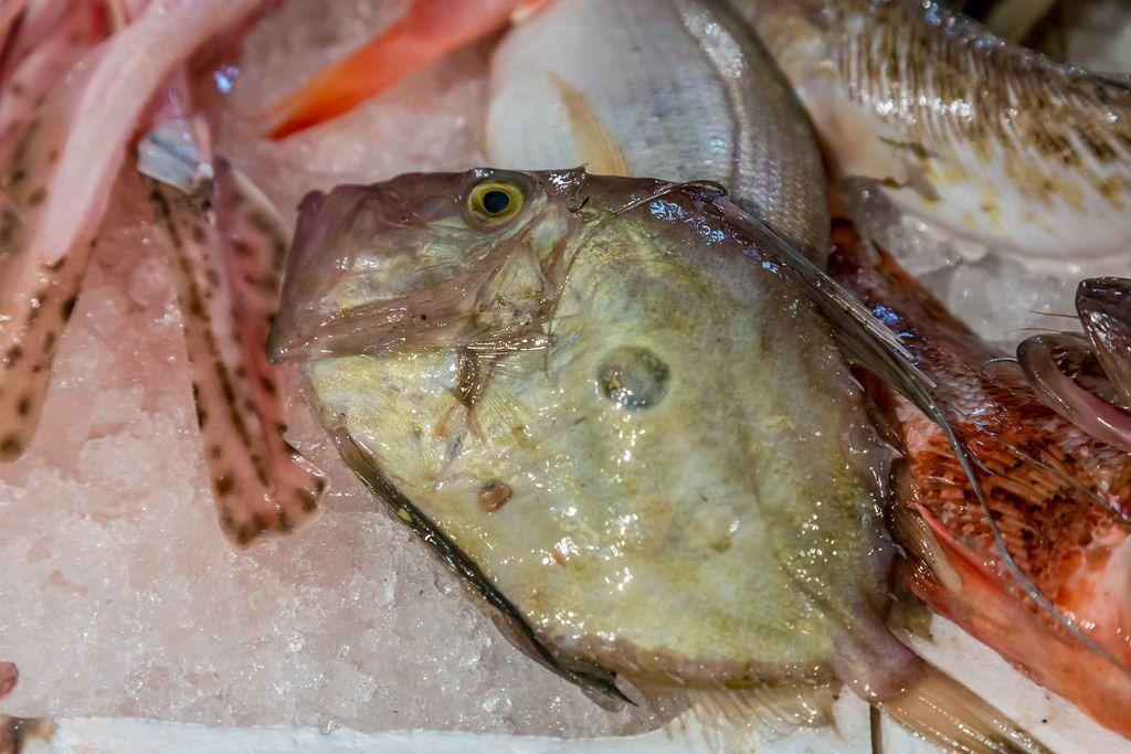 John Dory fish on fish market