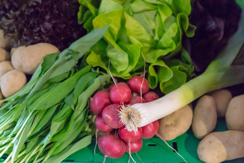 Jungzwiebel, Radieschen, Kartoffeln, Blattsalat und Bärlauch