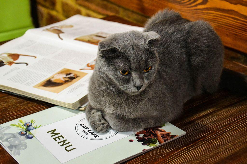 Katzen-Kaffee / Cat Cafe