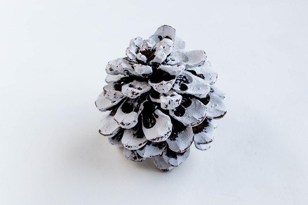 Kiefernzapfen gefärbt in weiß zum Dekorieren