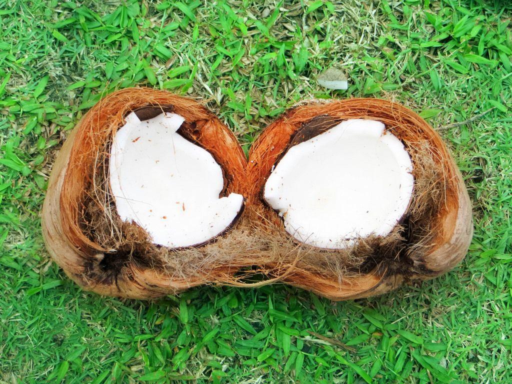 Kokosnusshälften
