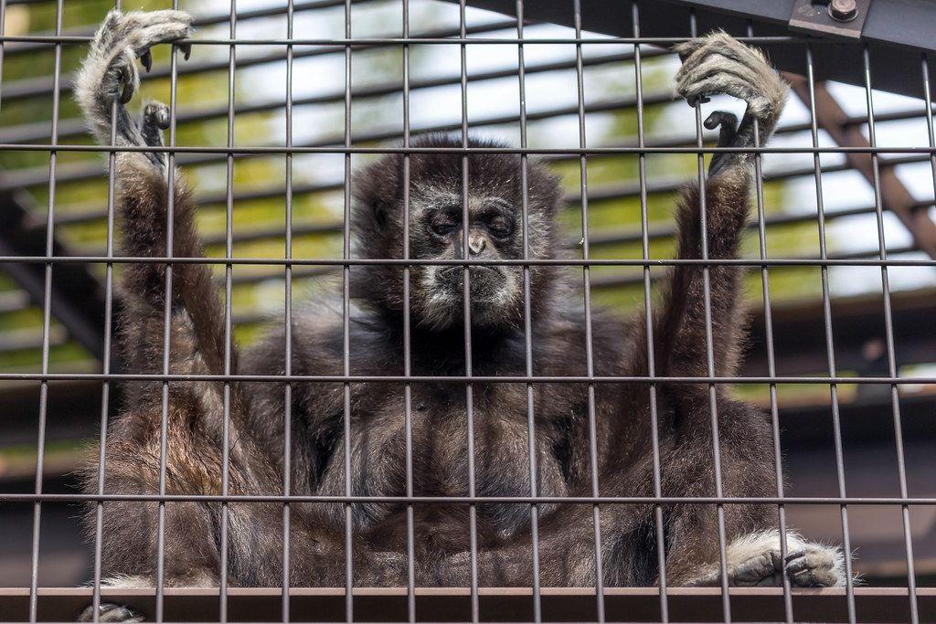 Krefeld/Zoo: Silvester 2019 / 2020 Tragödie: Affenhaus brennt ab. Viele Tiere tot